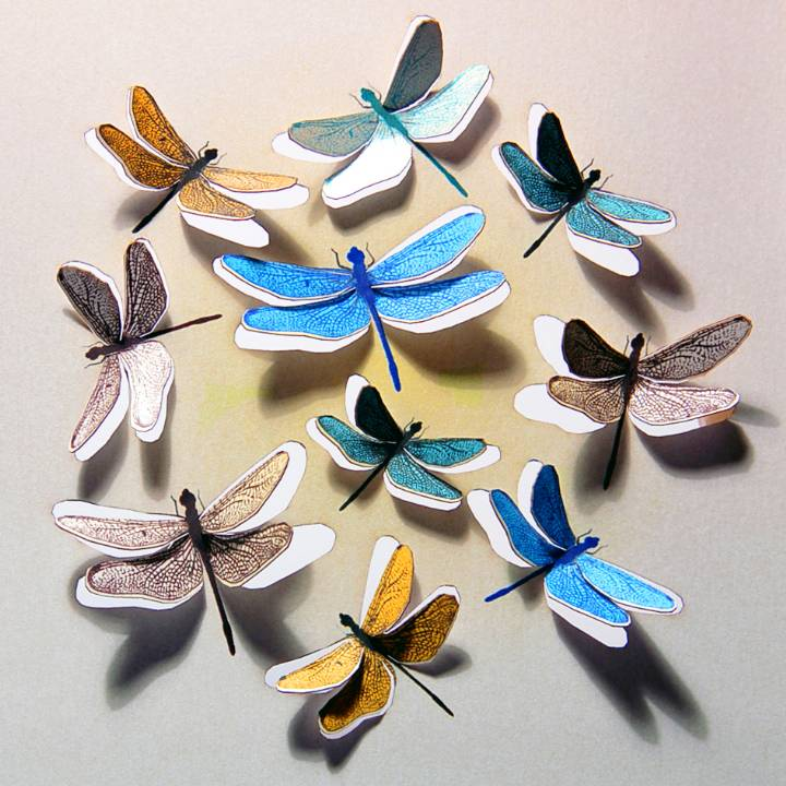 Circle of dragonflies (pack of 6)