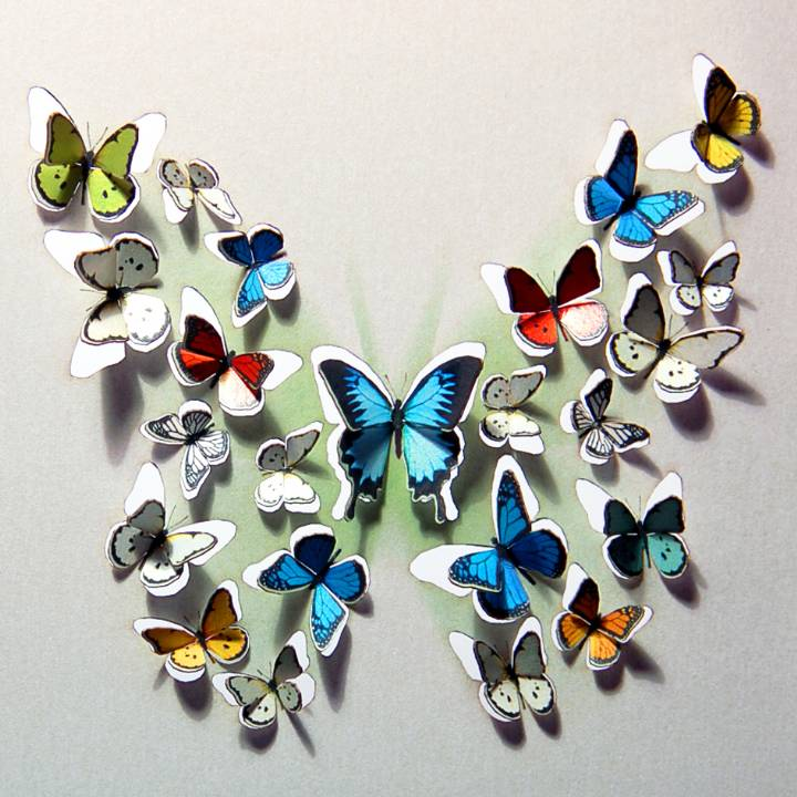 Butterfly of butterflies (pack of 6)